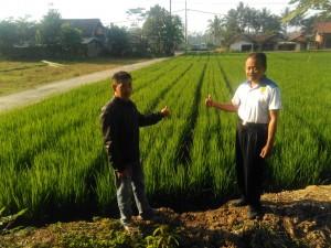 penggunaan agrobost pada tanaman padi